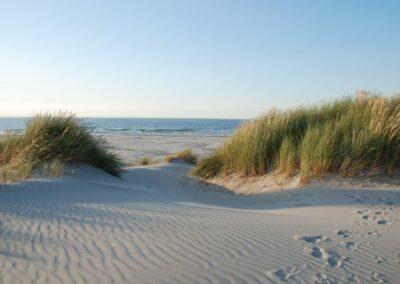 Schiermonnikoog duinen strand